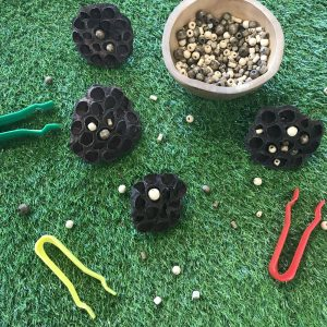 Large Lotus Pods With Beads In Loose Parts Bowl And Plastic Pincers