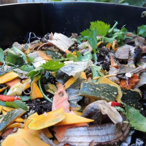 Whole Food Scraps In Worm Farm Close Up