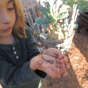 Girl Holding Single Worm In Hand Close