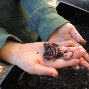 Girl Holding Multiple Worms In Hand Over Soil