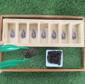 Pine Cones Six With Pincers And Six Compartment Sorter